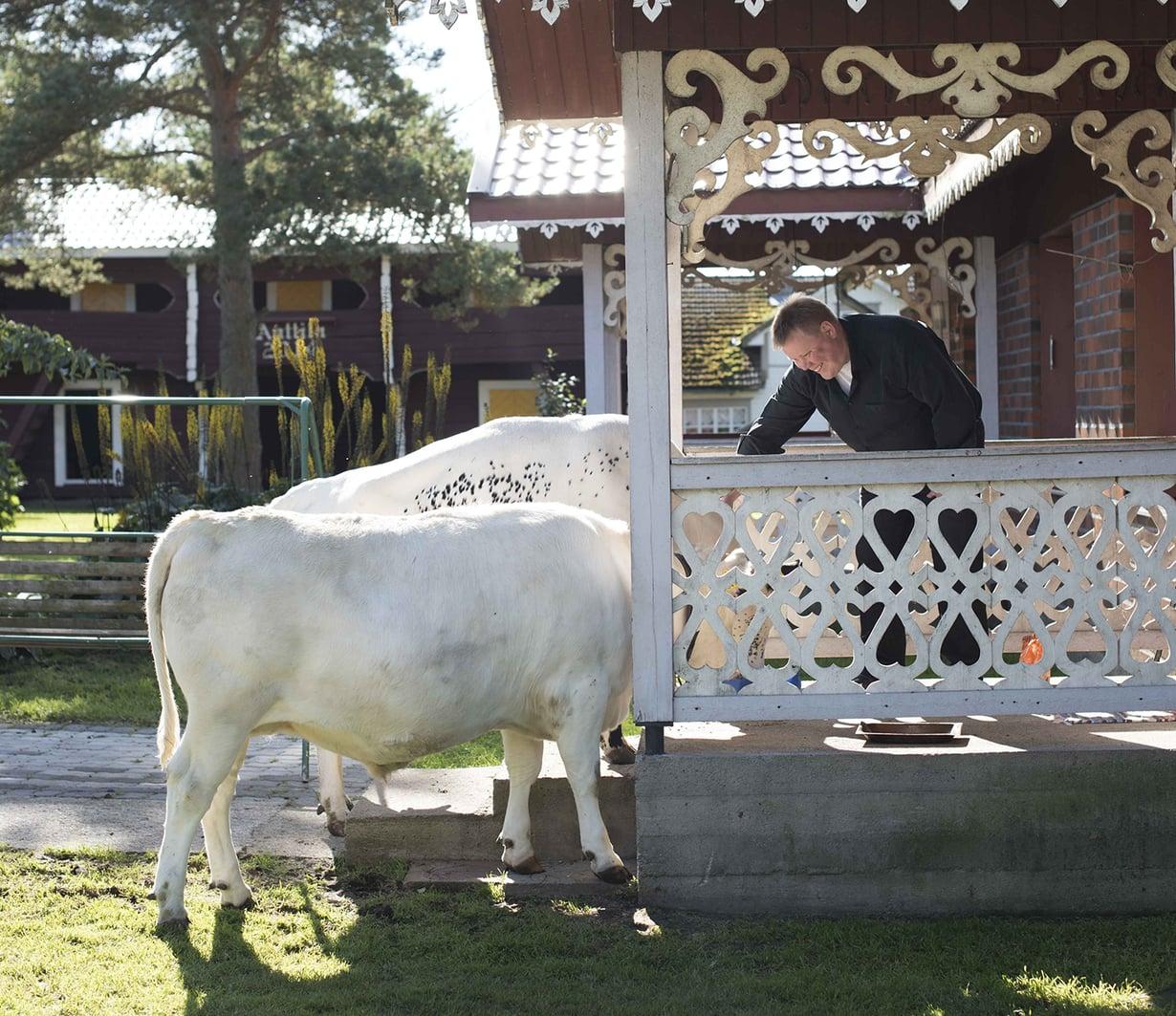 Niila-härkä on pihalehmä Onnan adjutantti. Onna saa tepastella tupaan asti, jos sitä sattuu huvittamaan.