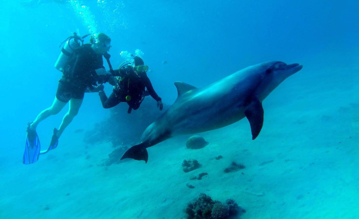 Delfiinit asuvat altaassa, josta pääsee vapaasti merelle. Niiden luo ei saa sukeltaa, vaan ne tulevat vierailijan luo, jos haluavat. Vain kouluttaja saa koskea niihin. Yksi riutan vanhimmista asukeista, Nana, tuli pyytämään rapsutusta kouluttajalta.