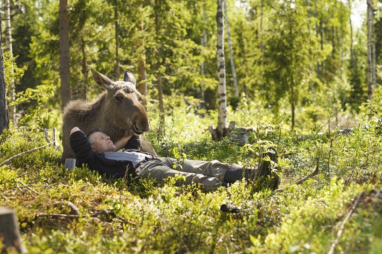 Markku Harju, 62, ja päiväunet Mervi-hirven kainalossa.