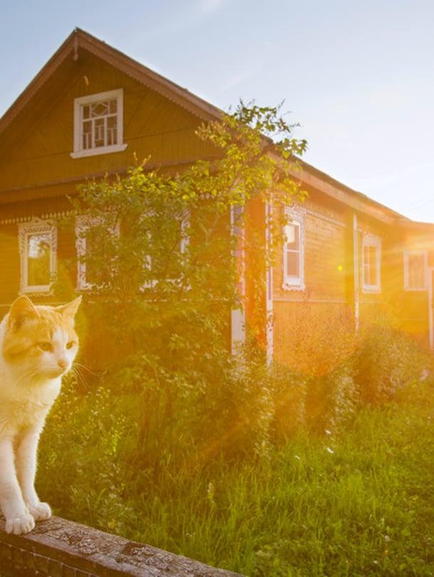 Kuittisen kylässä Aunuksen Karjalassa on lämpinä kesäiltana jotain taianomaista, kuin lapsuudesta tuttua tunnelmaa. Ilmassa leijuu vieno saunanlämmityksen ja sireenien tuoksu. Vapaana kipittävät koirakaverukset haukkua louskuttavat tienposkessa.