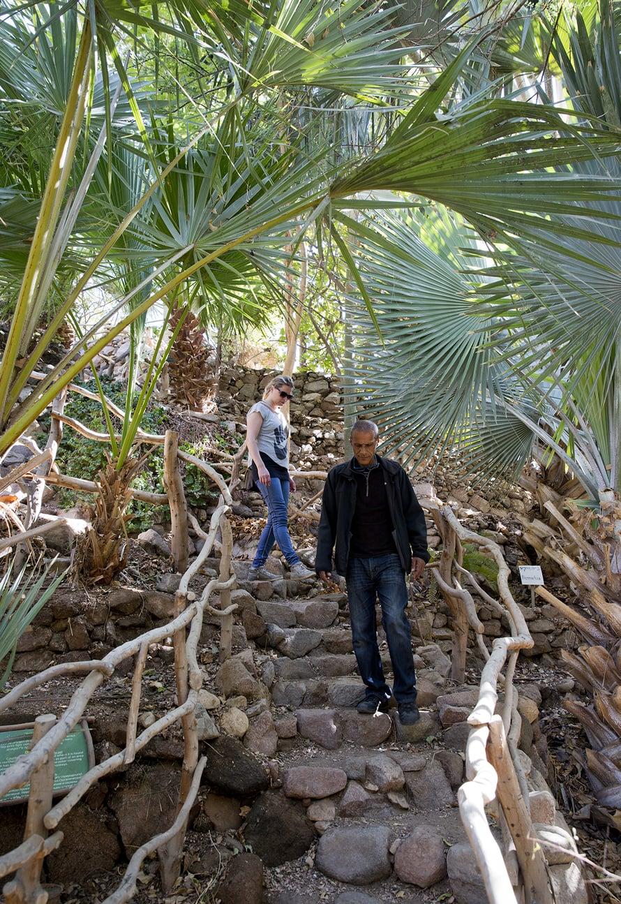 Ratzon Cohen opastaa kasvitieteelliseen puutarhaan.