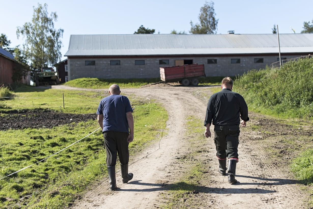 Isä ja poika tekevät vaativaa työtä Euroopan alhaisimmilla tuottajahinnoilla.