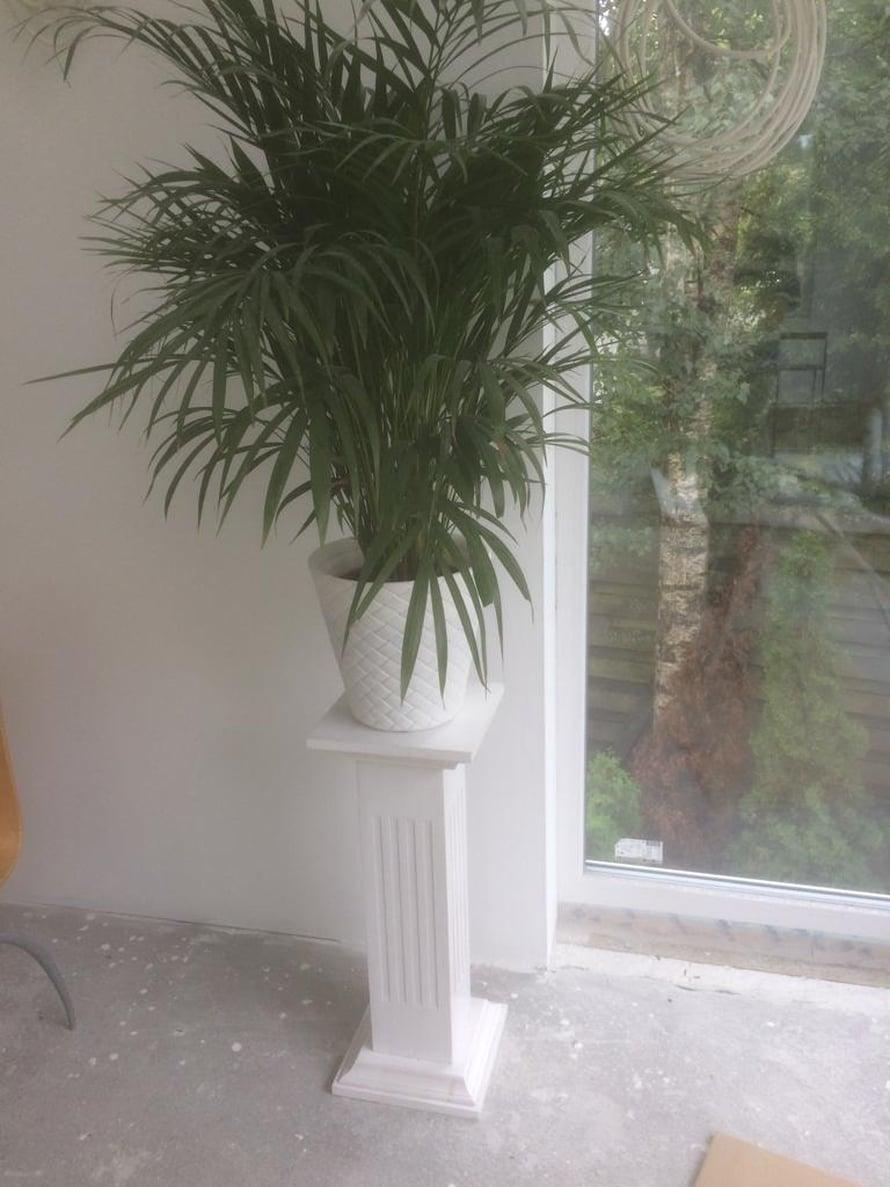 Ensimmäinen viherkasvi on muuttanut uuteen kotiin.