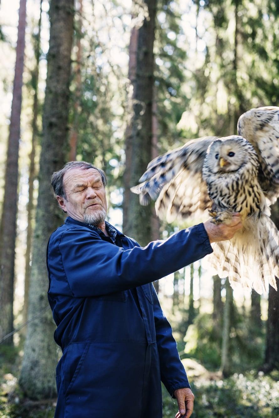 Heikinote pöllön jalasta on napakka, kunnes on lentoonlähdön aika. – Kun pöllö huomaa, ettei pääse räpiköimään, se yleensä tajuaa istua rauhassa.