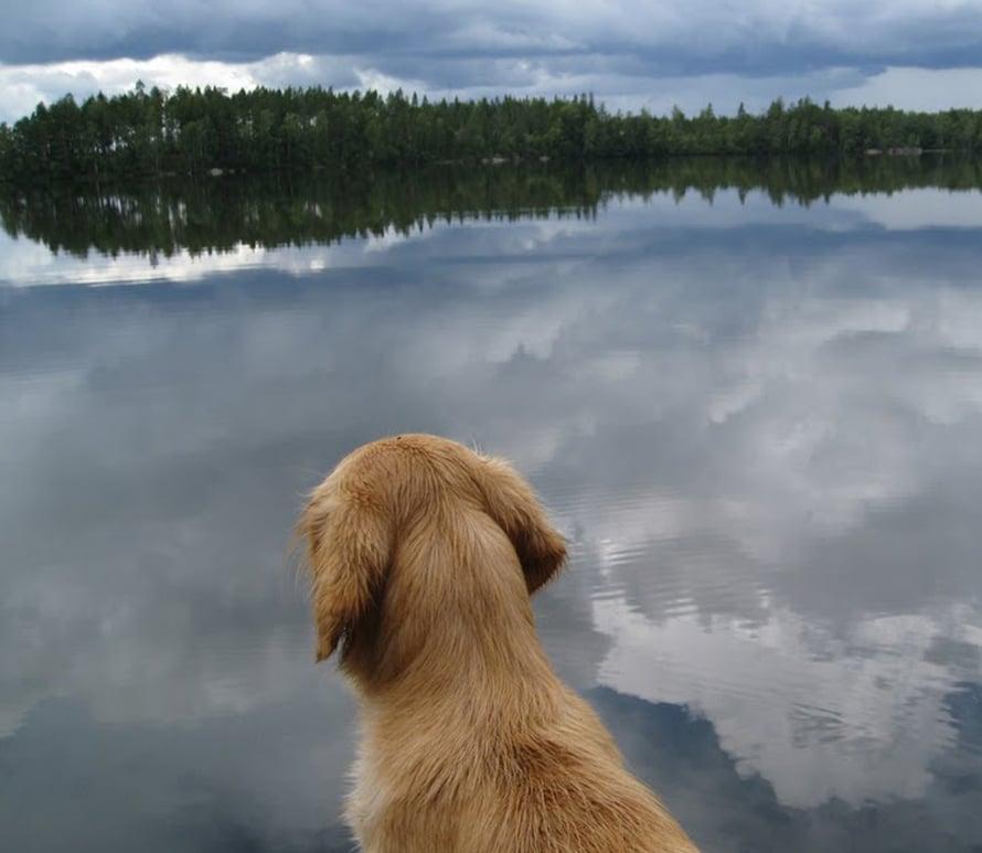 Kuvan koira ei liity tapaukseen. Kuvan järvessä ei näy eikä ole sinilevää.