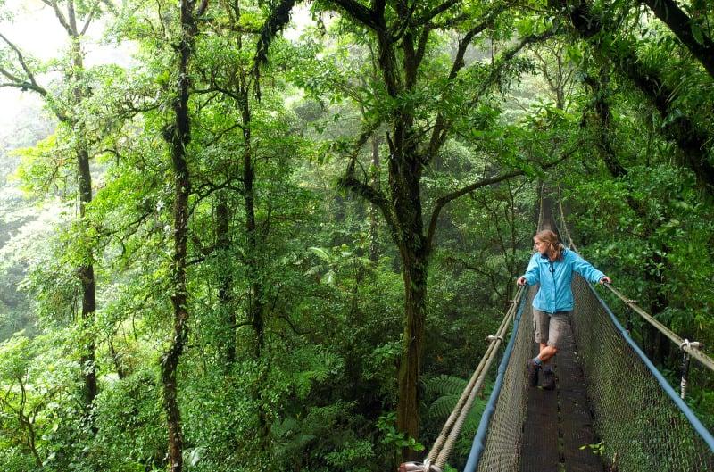 Viidakon poikki on viritetty riippusiltoja.