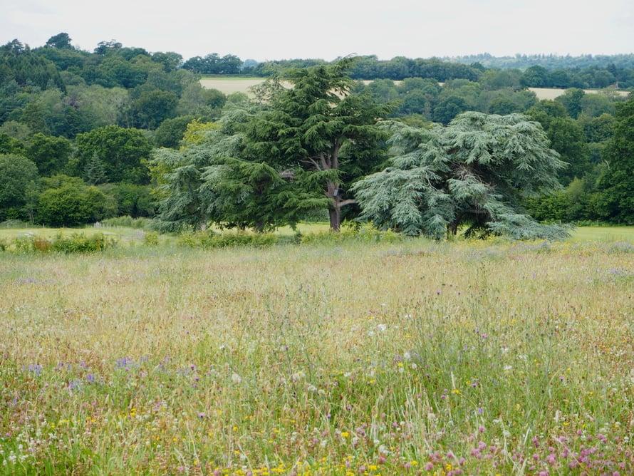 Maisema Wakehurstista. Etualalla Coronation Meadow, luonnonniitty, joita perustettiin joka kreivikuntaan kuningattaren kruunajaisten vuosipäivänä.