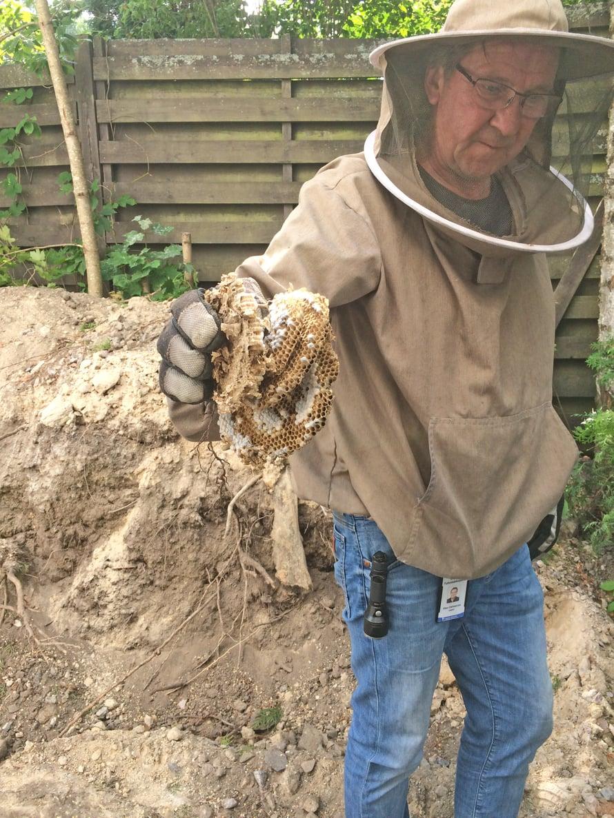 Tuholaistorjuja esittelee maa-ampiaisten pesän jäänteet.