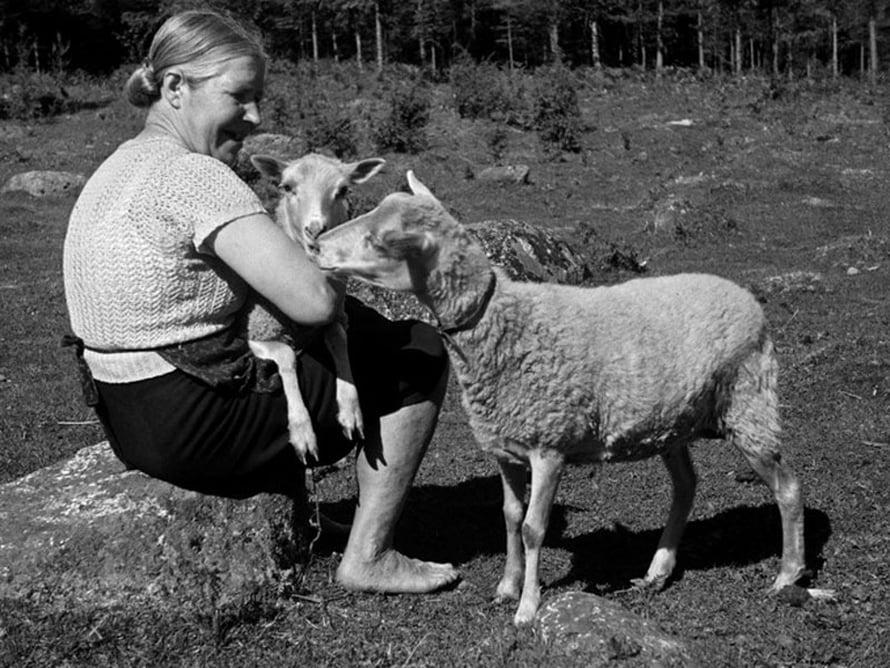 """Nainen ja kaksi lammasta maatilalla, 1940-luku. Kuva: <span class=""""photographer"""">Väinö Kannisto / Helsingin kaupunginmuseo</span>"""