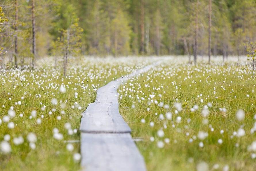 Tillikkajärven kansallispuistossa pääsee aidon erämään makuun.