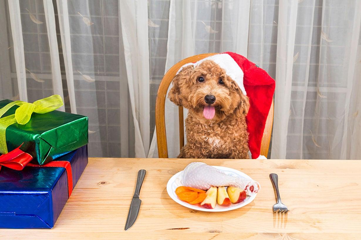 Saako sinun koirasi istua ruokapöydän tuolilla?