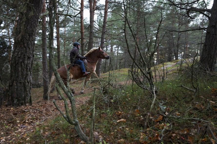 Metsäpoluilla Nuppu ja Heikki kiitävät kumpuilevissa maastoissa välillä reippaammin, välillä rauhassa maisemia tutkiskellen.