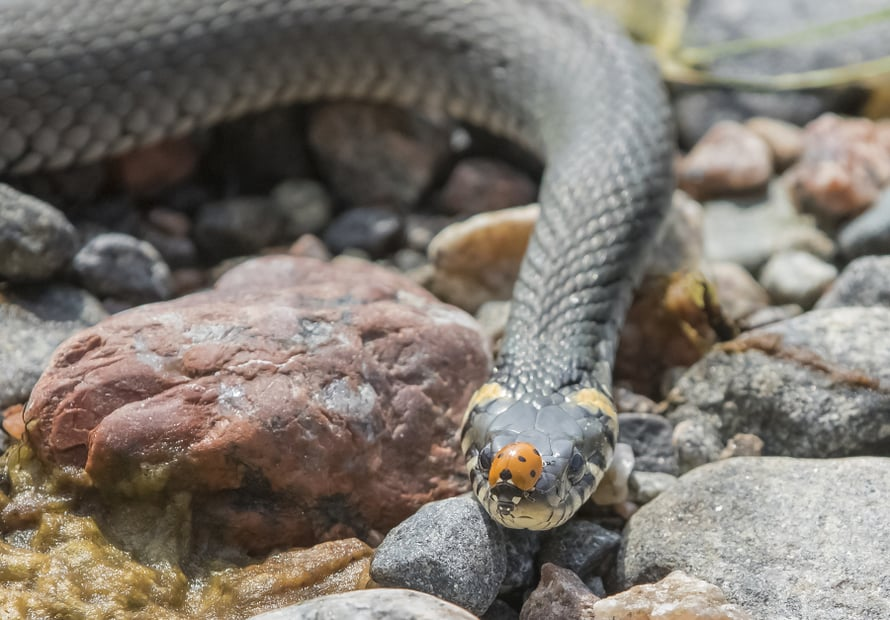 Lissen käärmekuvat ovat kiehtovaa katseltavaa.