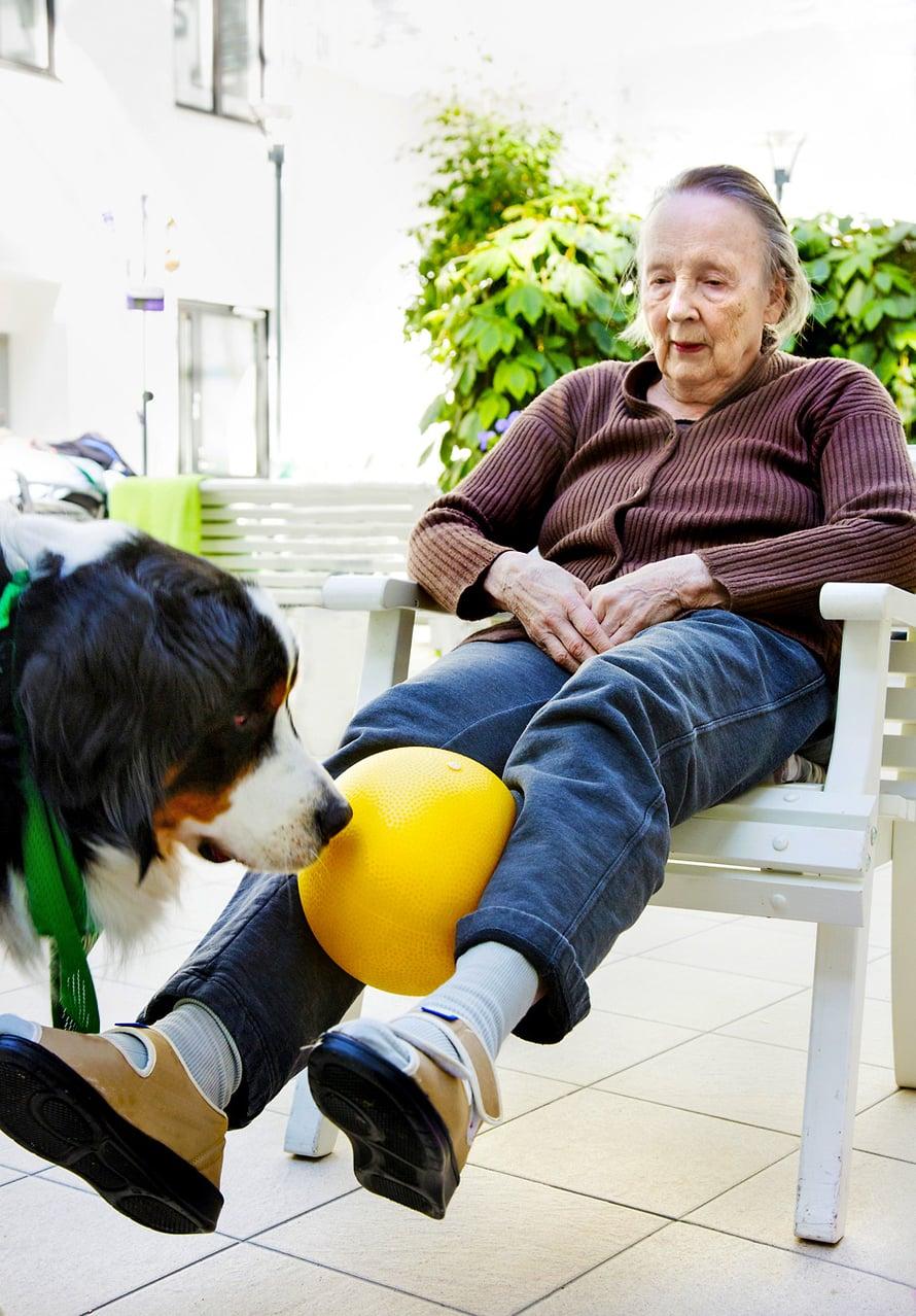 Hertta pallottelee Viljon kanssa ja harjoittaa samalla jalkalihaksiaan.