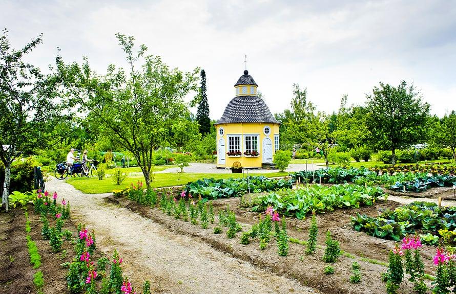 Rovasti Aspegrenin vanhaa puutarhaa hoidetaan entiseen malliin.
