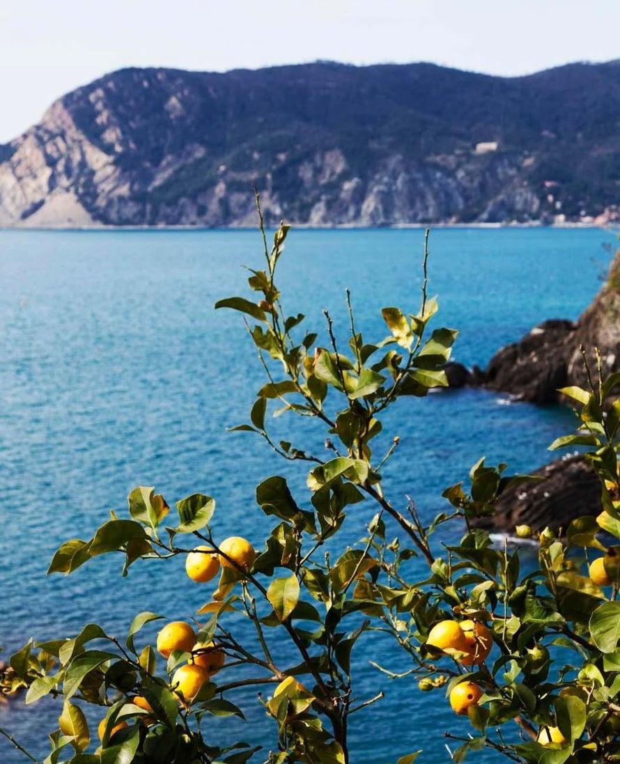 Monterosso järjestää sitruunafestivaalin toukokuussa.