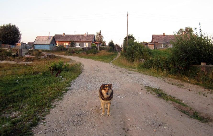 Koiria riittää Kuittisen kylässä.