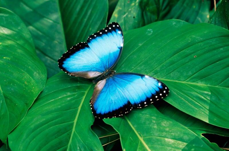 Perhoset liihottavat Catarata La Pazin luonnonpuistossa.