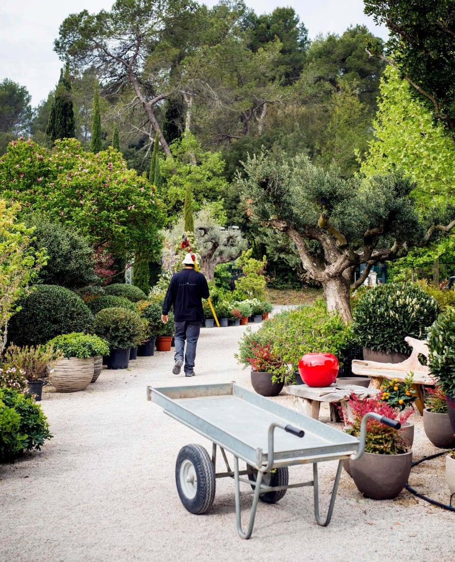 Leikatut pensaat antavat muuten luonnonmukaiselle puutarhalle ryhtiä ja luonnetta.