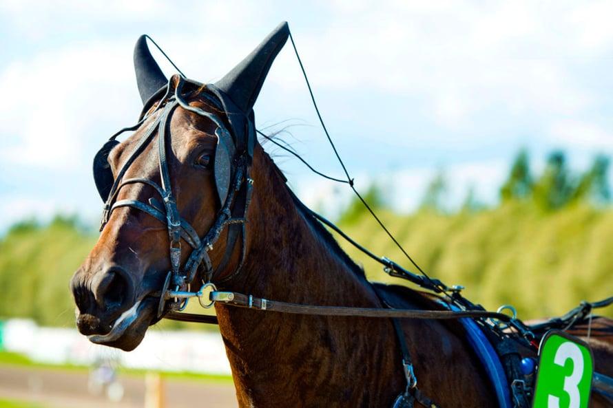 Jos hevonen tulee maaliin korvat pystyssä, sillä on voimat tallella.