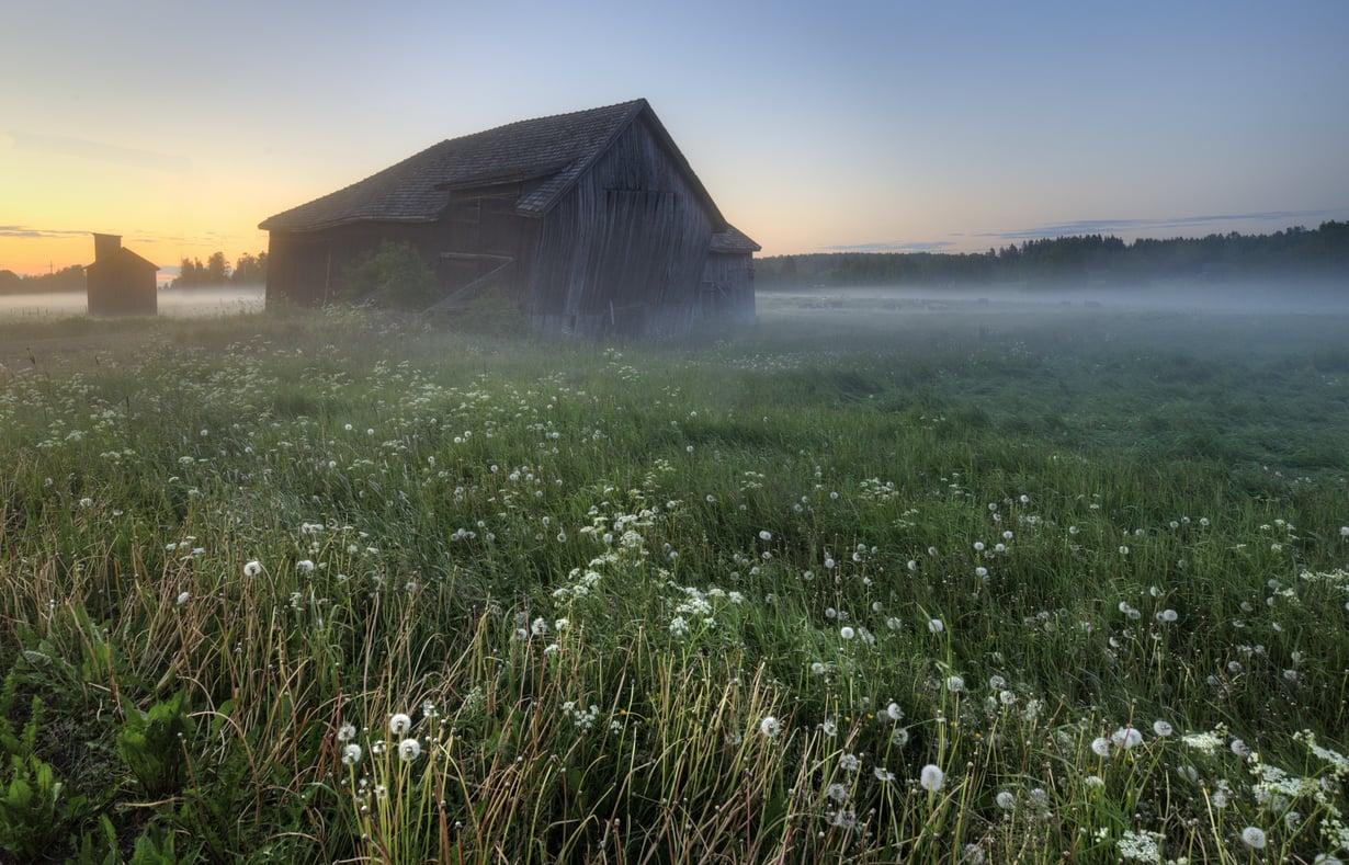 Kun kierii alasti kasteisella pellolla, potkii onni rakkaudessa.