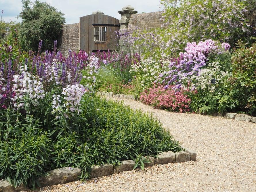Kuvia Wakehurstin muureilla ympäröidystä puutarhasta. Ylimmän kuvan daalia on lajiketta Arabian Night, vaaleanpunaisen pipon lajike on Burford Seedling ja alempi pinkki ruusu on Rosa Raubritter. Pipoja tässä puutarhassa kasvaa kuin pipoa, eri väreissä.