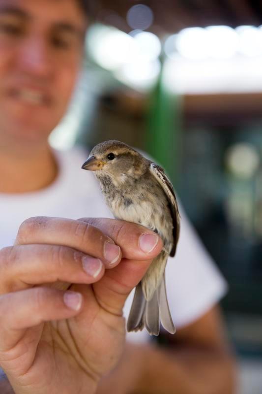 Hyvinkin kevyt lintu voi lentää tuhansia kilometrejä.