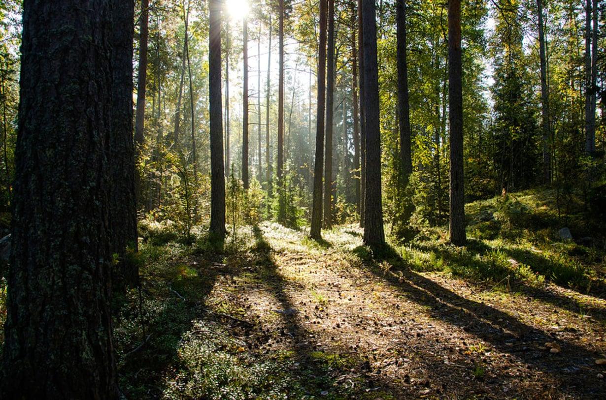 Metsä on meren ohella tärkeä paikka Lenitalle.