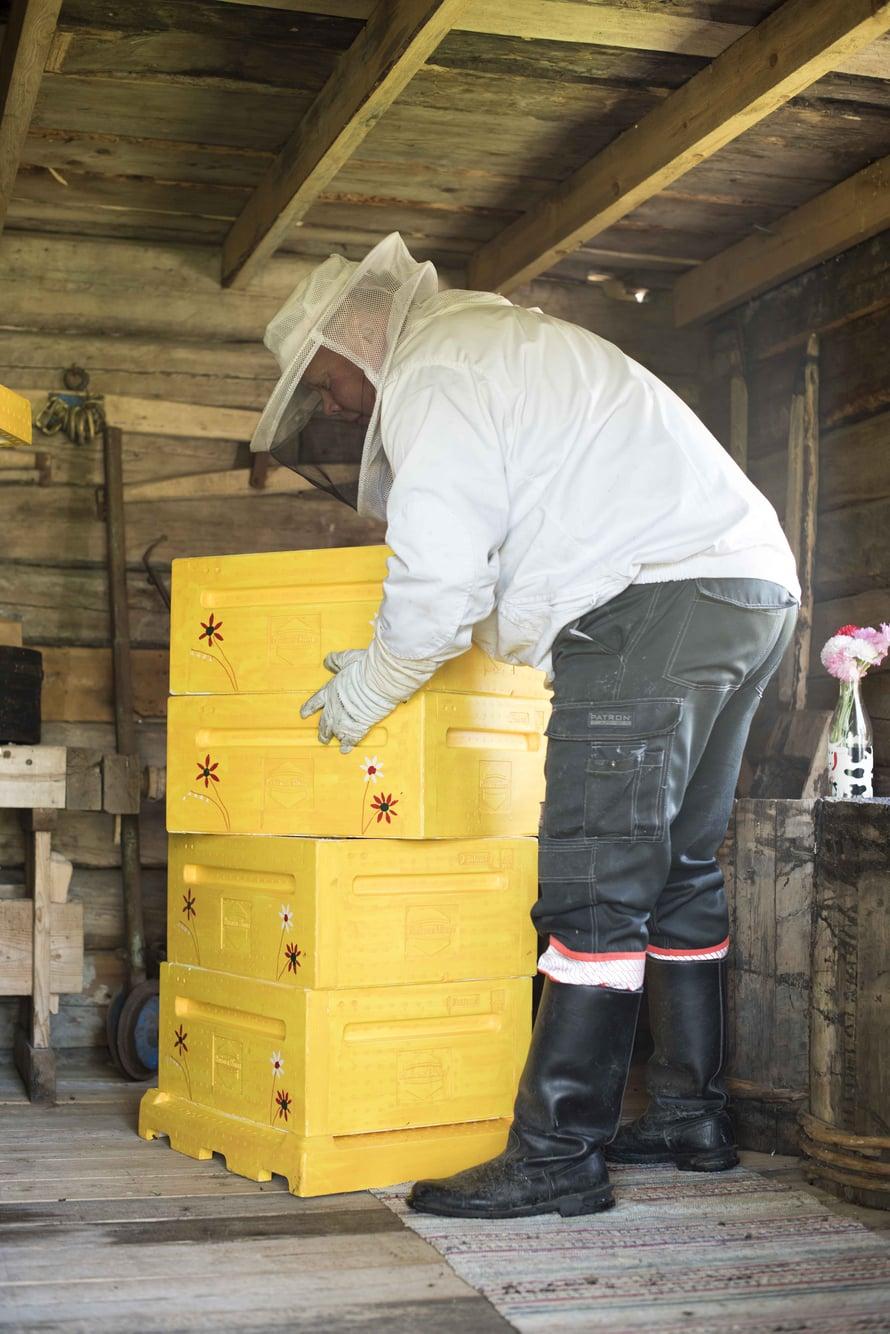Mehiläiset ovat Tonin  tuorein innostus.