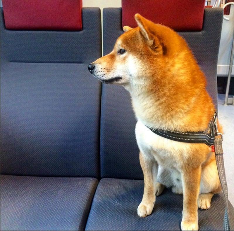 Lähijunassa junailua.