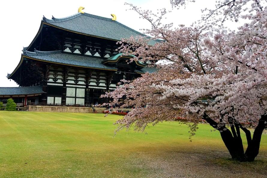 Todaiji-temppeli on yksi maailman suurimmista puurakennuksista.