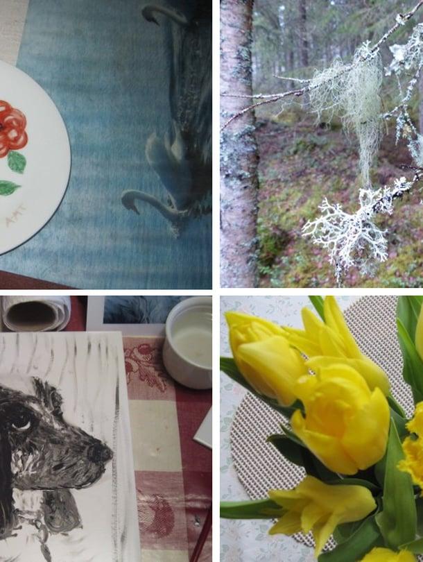 Mukavien asioiden kalenterissa voit jättää myös kuvan, joka on ilostuttanut. Nämä kuvat ovat etlehti.fin lukijoiden omia.