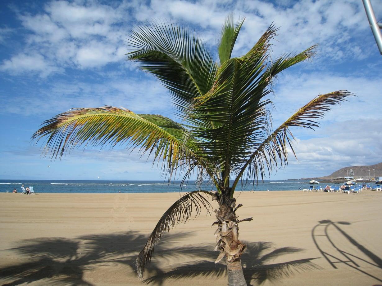 Gran Canaria on reissaajien kestosuosikki. Kuva on Las Palmasista.
