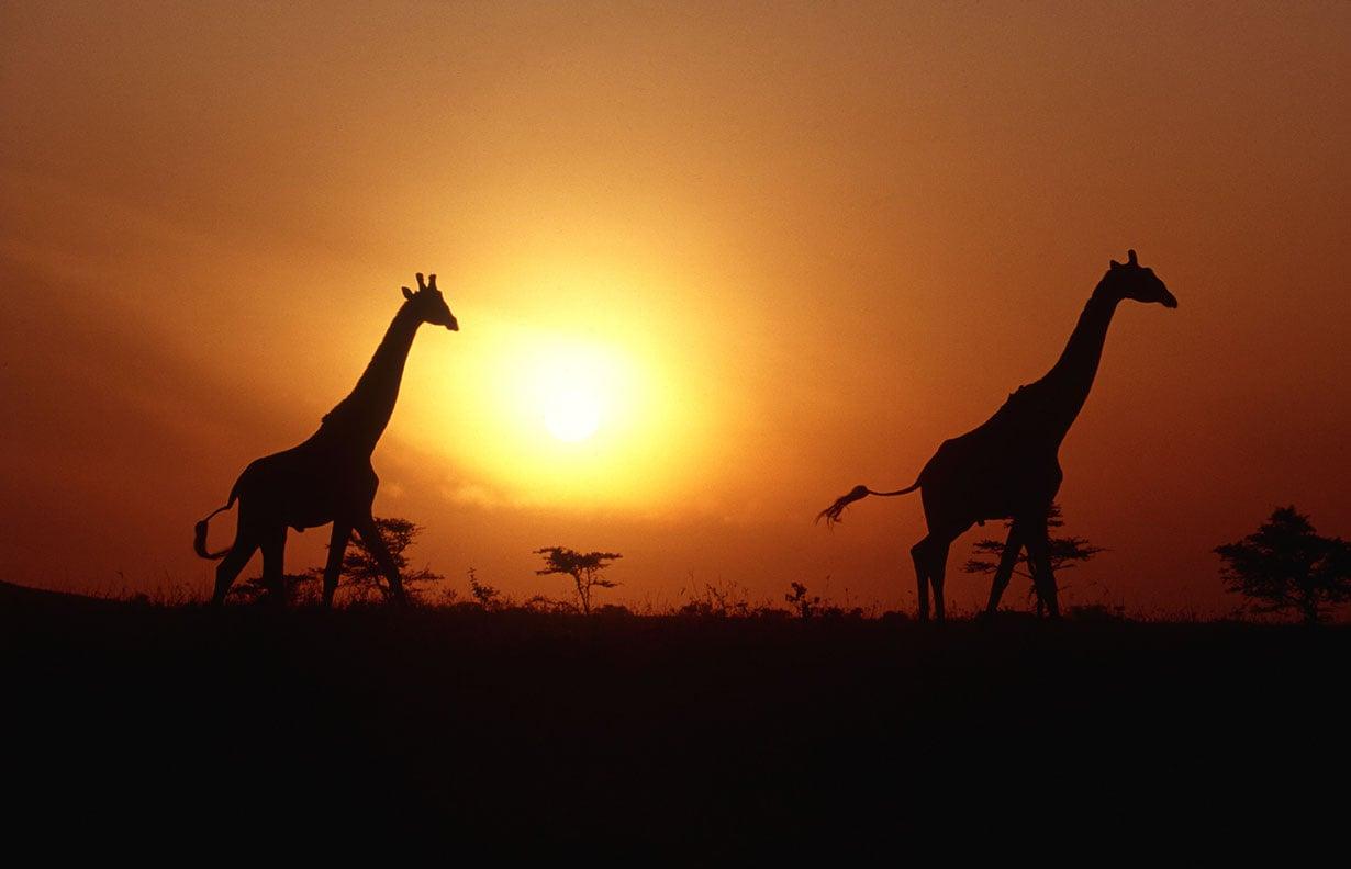 Safarille voi mennä mihin vuodenaikaan tahansa. Kuivana aikana eläimiä näkee paremmin.