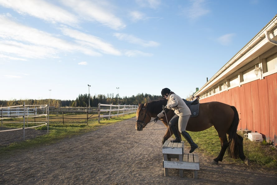 Ada nousee hevosen selkään aina korokkeelta. Se säästää myös hevosen selkää.